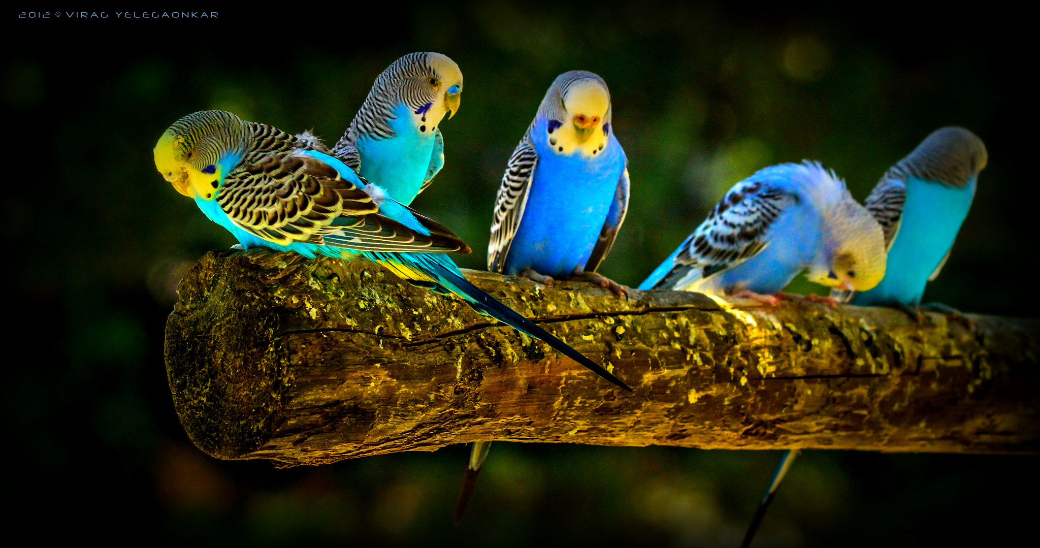 Photograph colorful cuties... by Virag Yelegaonkar on 500px