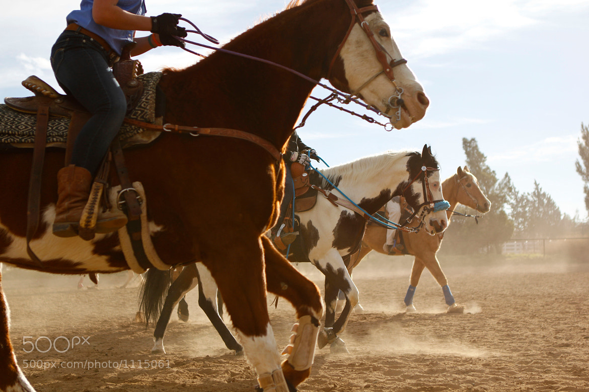 Photograph Stampede by Matt Rondel on 500px