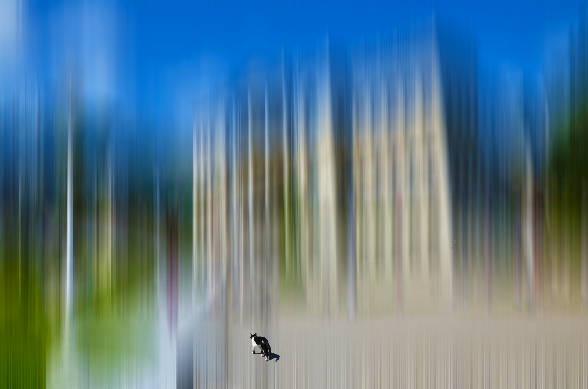 Photograph lonely cat in a town by Chartchai Srisombut on 500px