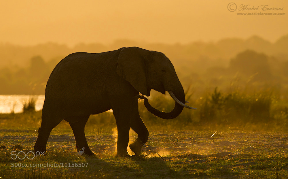 Photograph Elephant Dust by Morkel Erasmus on 500px
