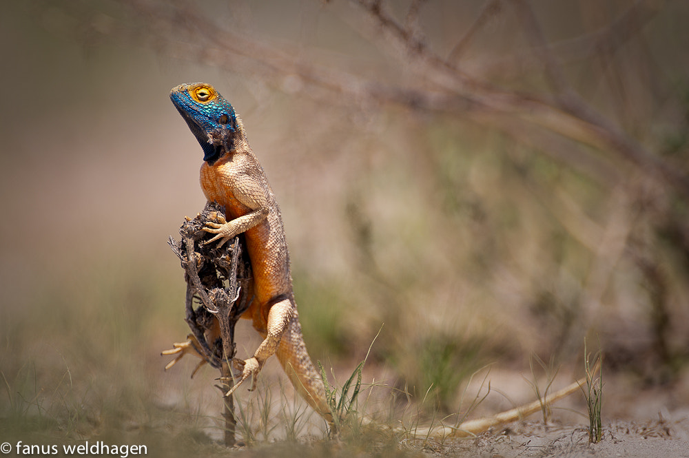 Photograph Agama Lookout by Fanus Weldhagen on 500px