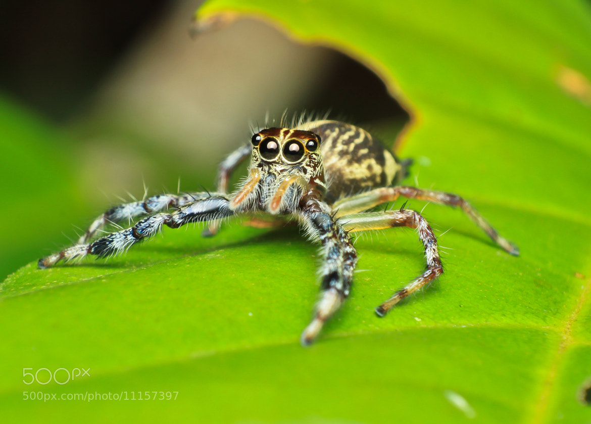 Photograph jumper on a leaf by Taufik Art on 500px
