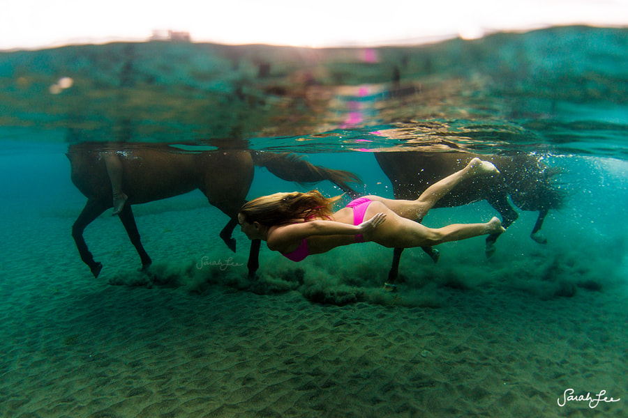 Swimming with Horses in Dominica by Sarah Lee on 500px.com
