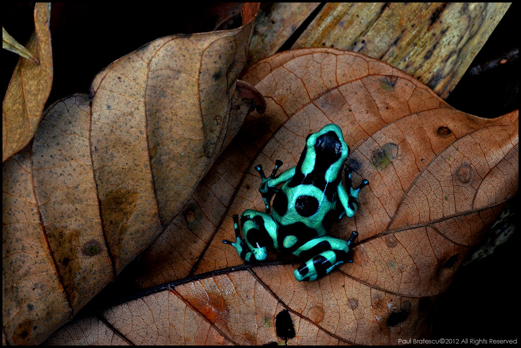 Photograph Jungle Jewel by Paul Bratescu on 500px