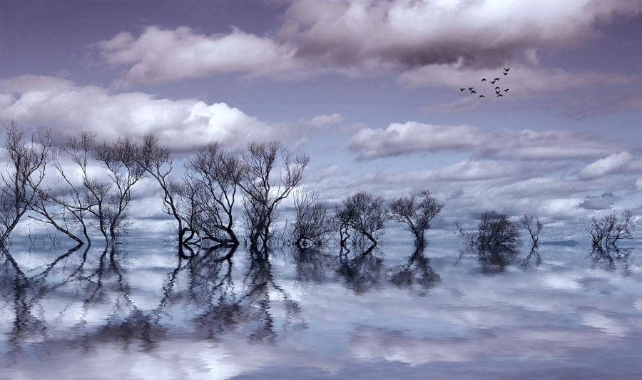 Timeless Dream by Margaret Morgan on 500px