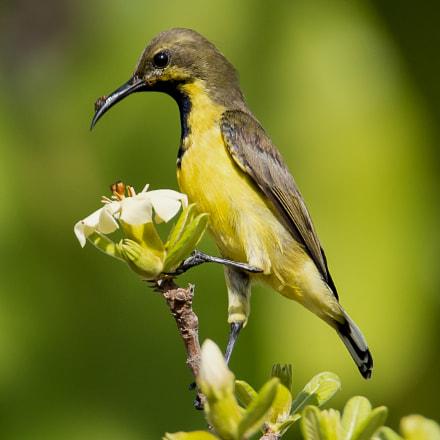 sunbird thailand