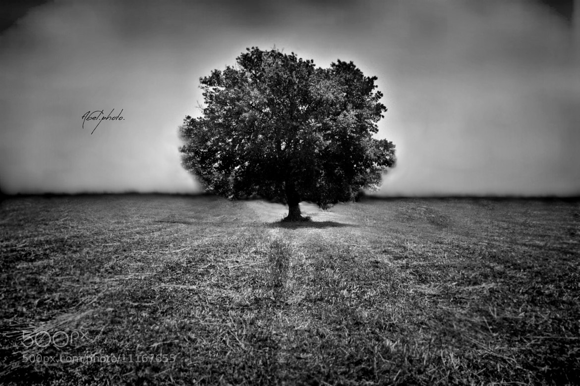 Photograph Year 2153: The last tree on earth. by Abele Cirillo on 500px