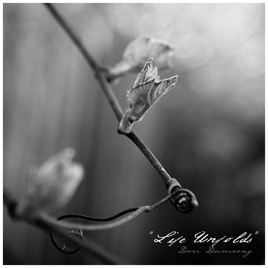 Photograph Life Unfolds by Dori Dumrong on 500px