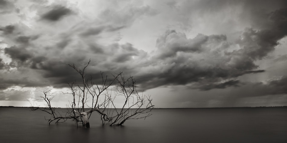 Photograph The Old Bay Tree by Andrew Vernon on 500px