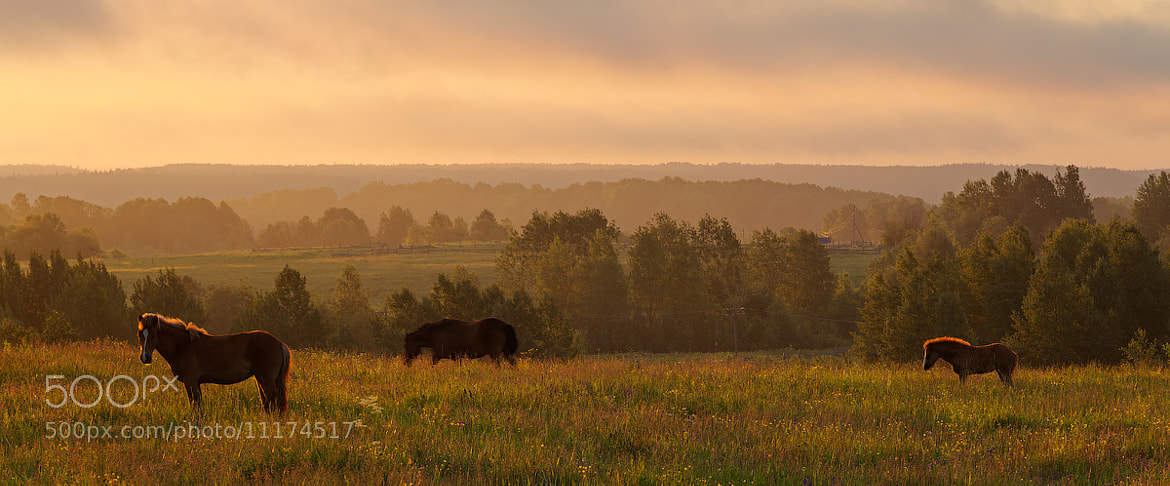 Photograph Horses in the morning by Sergey Ershov on 500px