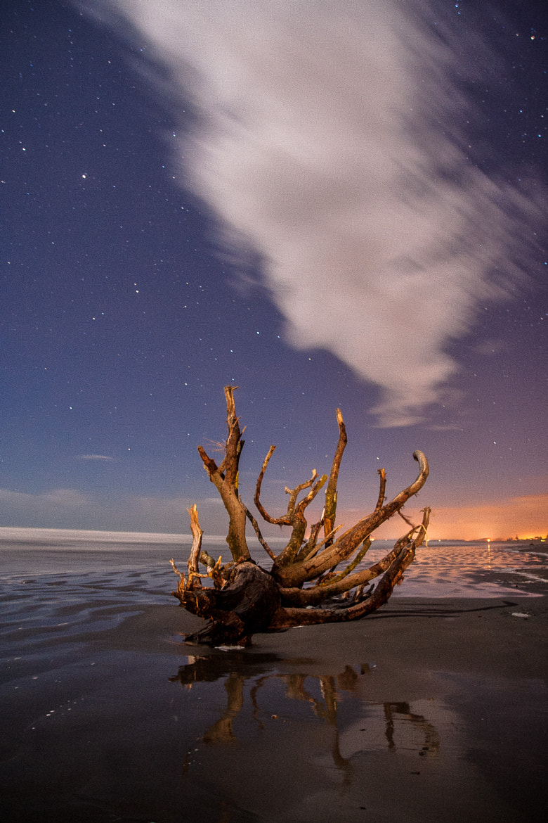 Photograph Driftwood by Rob Wilson on 500px