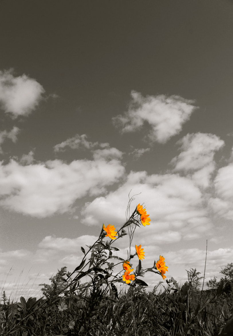 Photograph Flowers in the sky by Jon Mindelli on 500px