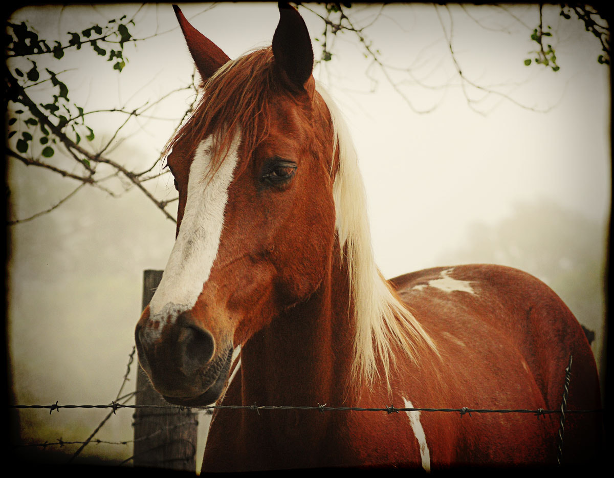 Photograph Horse on a foggy morning by DS Conyers on 500px