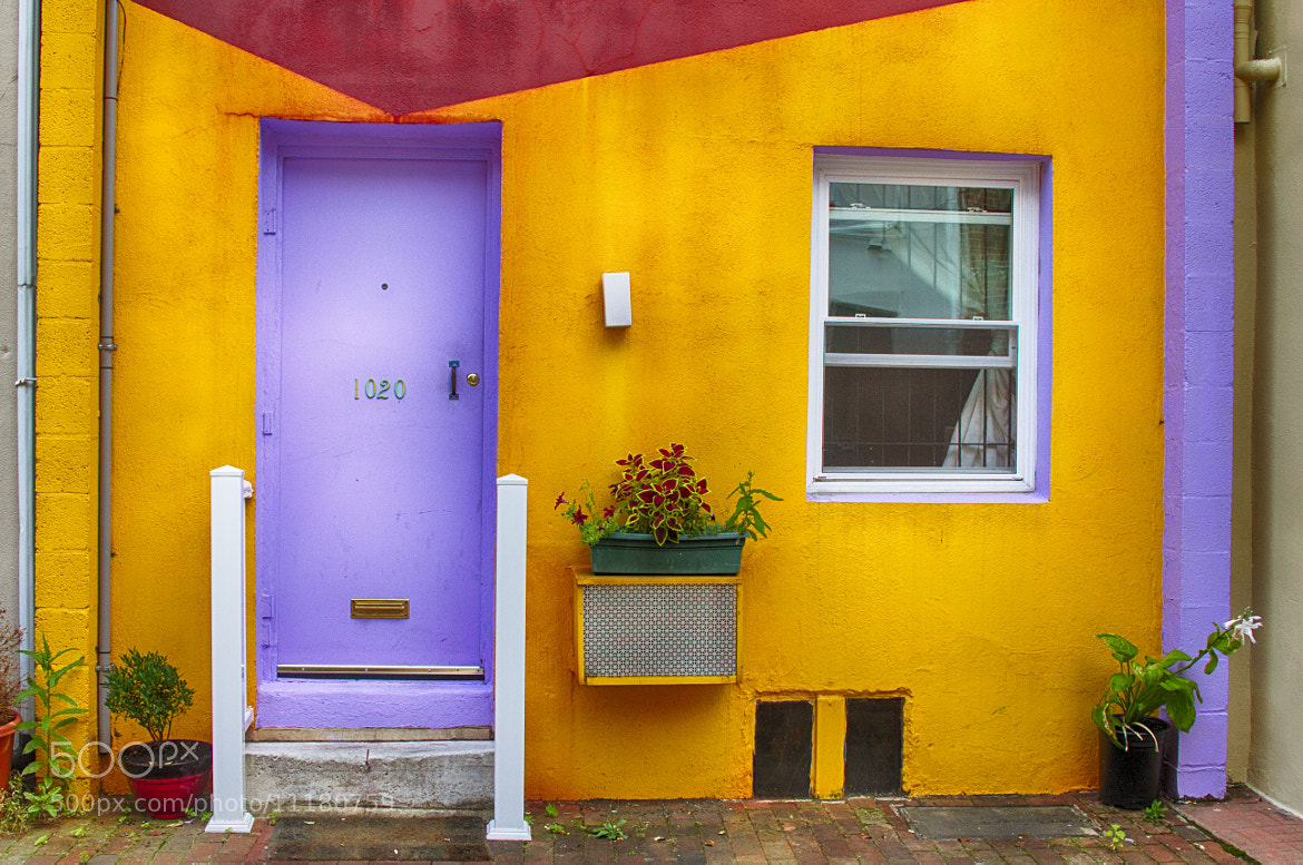 Photograph Bold Color by Sonny Hamauchi on 500px