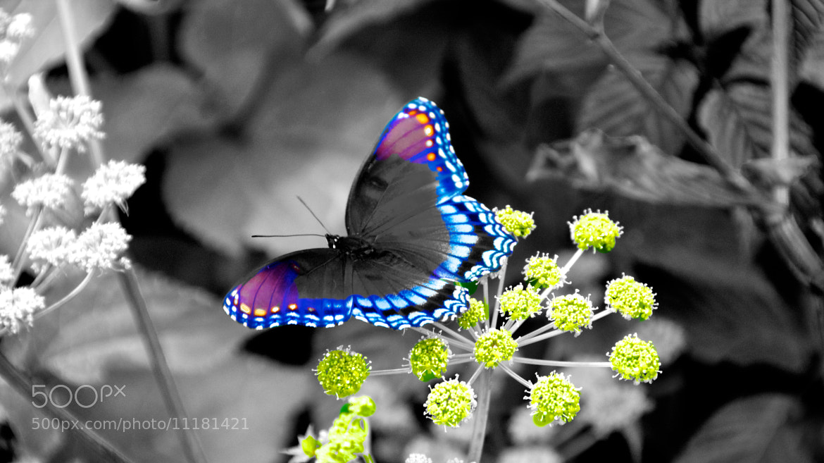 Photograph I give Colors to Life! by Thiru Moorthy on 500px