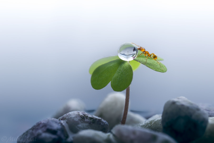 Photograph One Life by Miki Asai on 500px