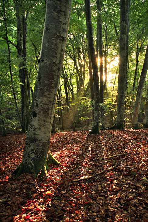 Photograph Shining Woods by Florent Courty on 500px