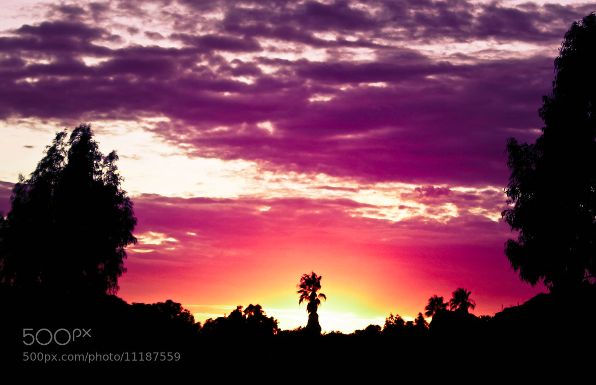 Photograph Purple Sunset by Bar Pupco on 500px