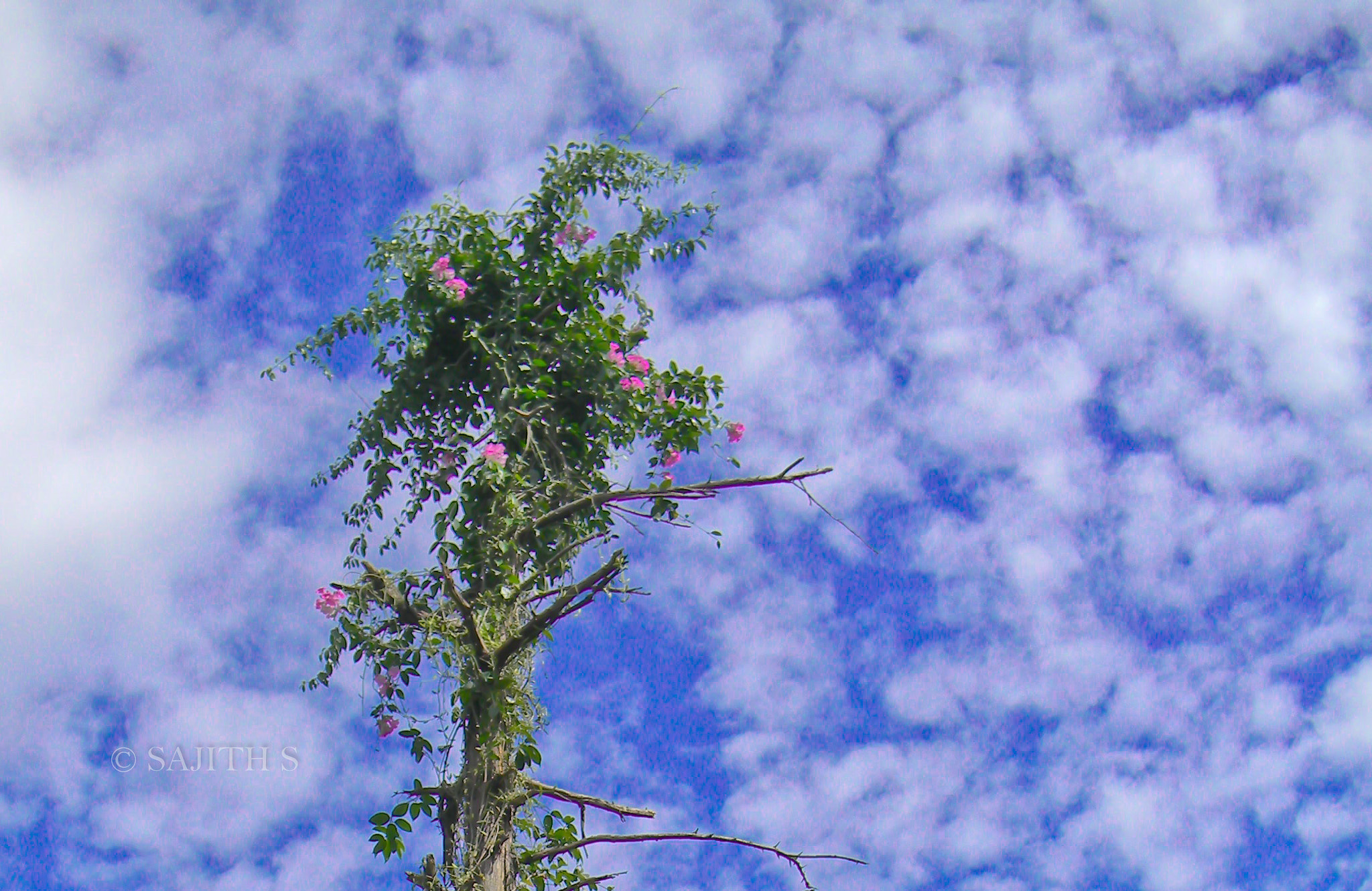 Photograph Tree and cloud by Sajith S on 500px
