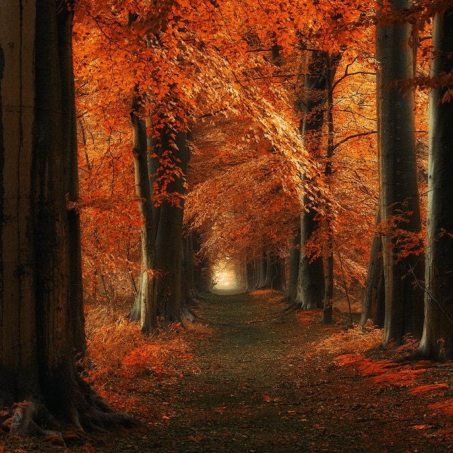 Photograph The way Home by J-W v. E. on 500px
