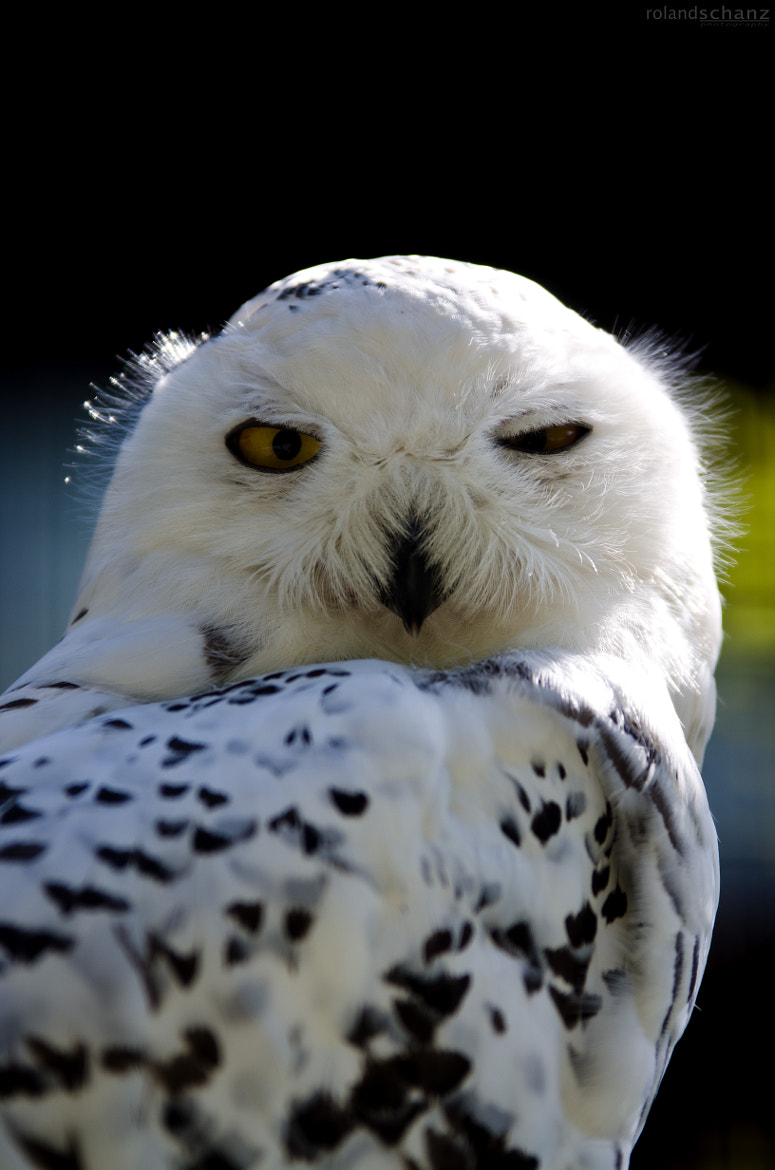 Photograph highly sceptical owl by Roland Schanz on 500px