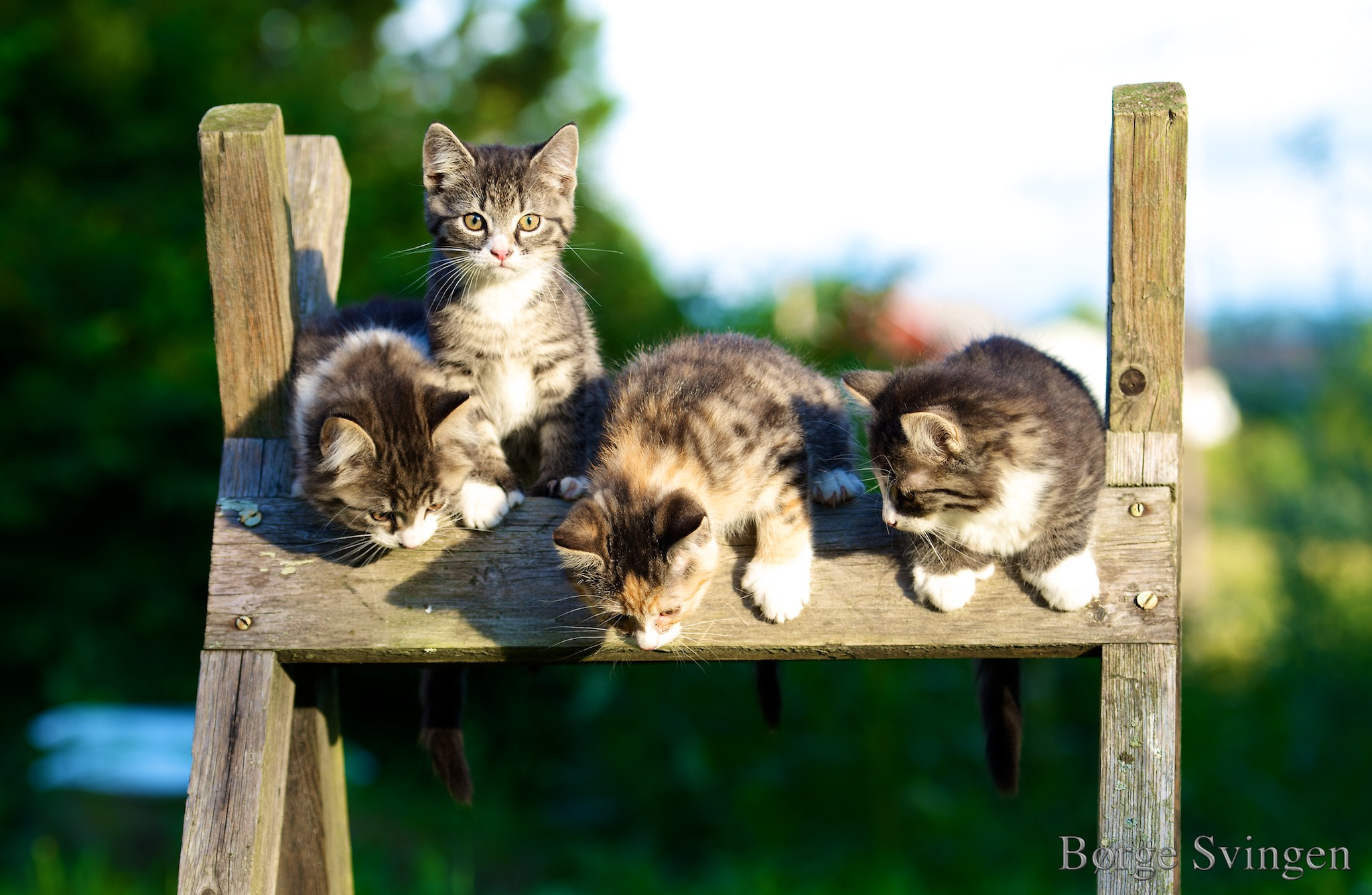 Photograph Kittens by Børge Svingen on 500px