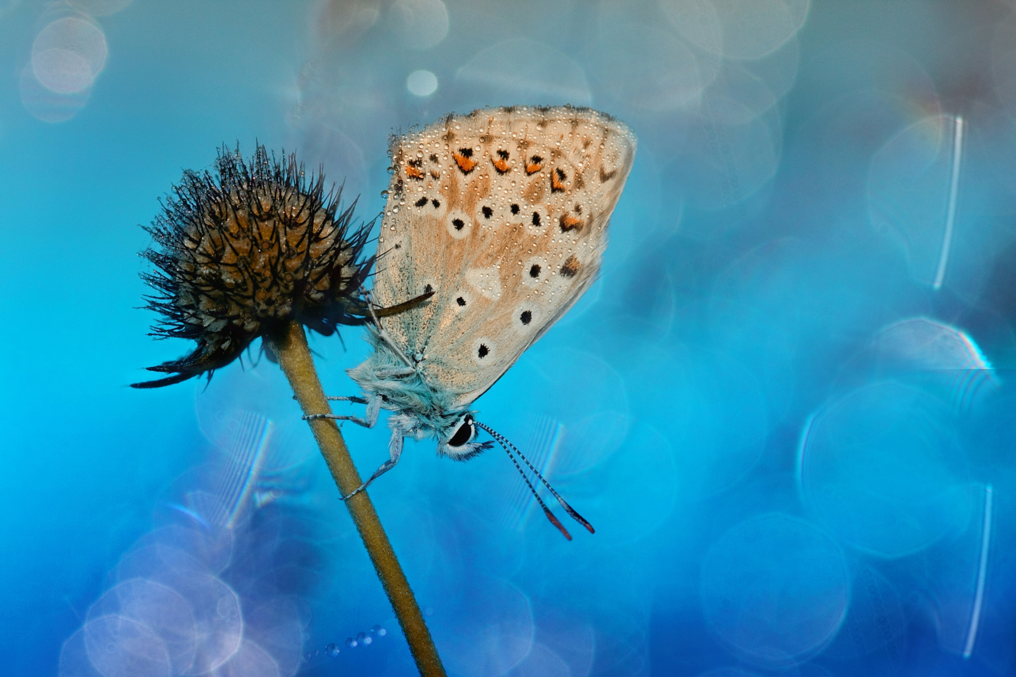 Photograph Bubbelicious  by Wil Mijer on 500px