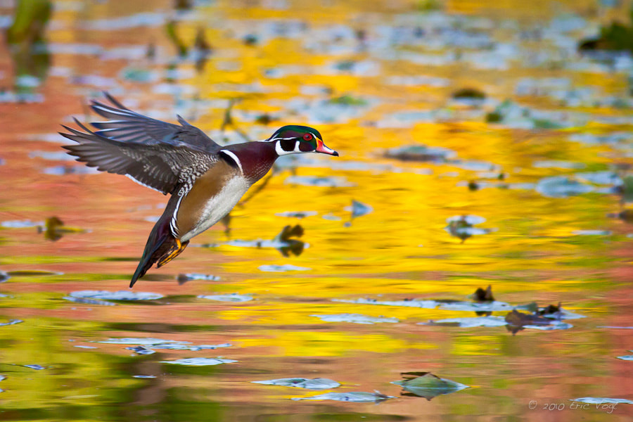 Photograph Landing in Autumn by Eric Vogt on 500px