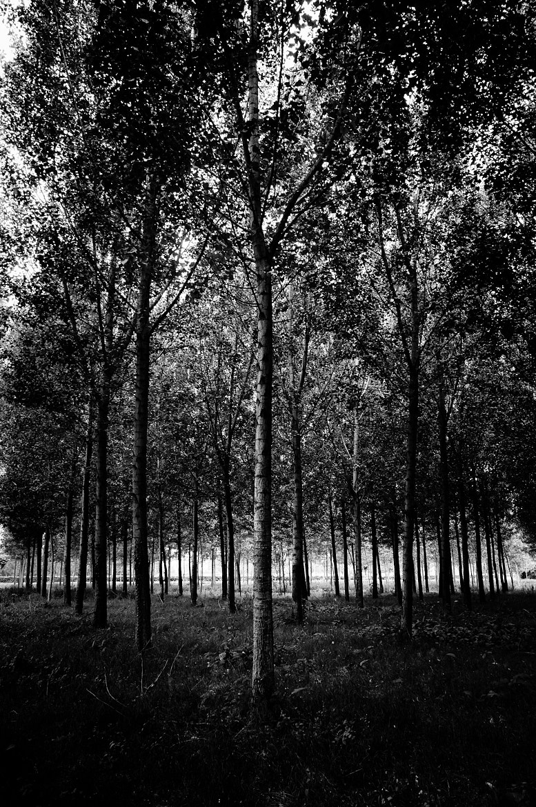 Photograph Young trees by Nicholas Marmonti on 500px