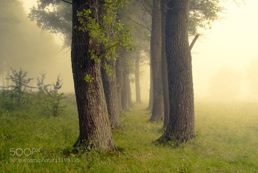 Photograph Misty morning IV by Roman Sayko on 500px