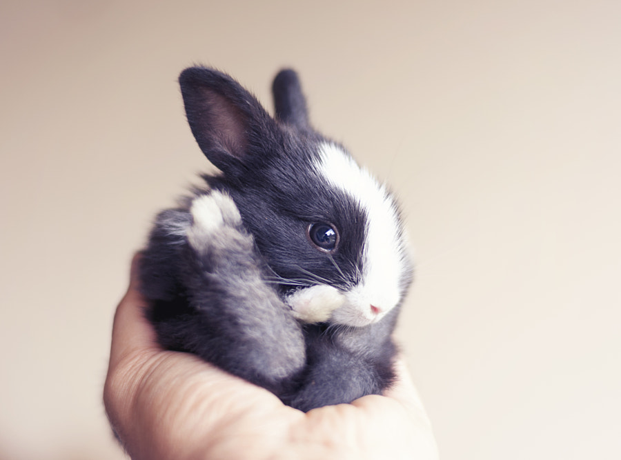 Little furball- day 18 by Ashraful Arefin on 500px.com