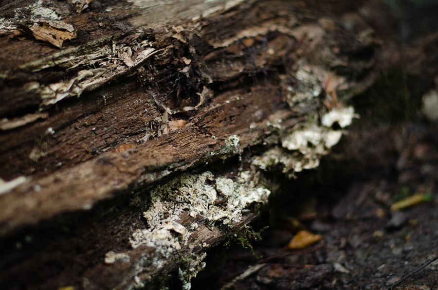 Photograph Rotten by Sim On on 500px