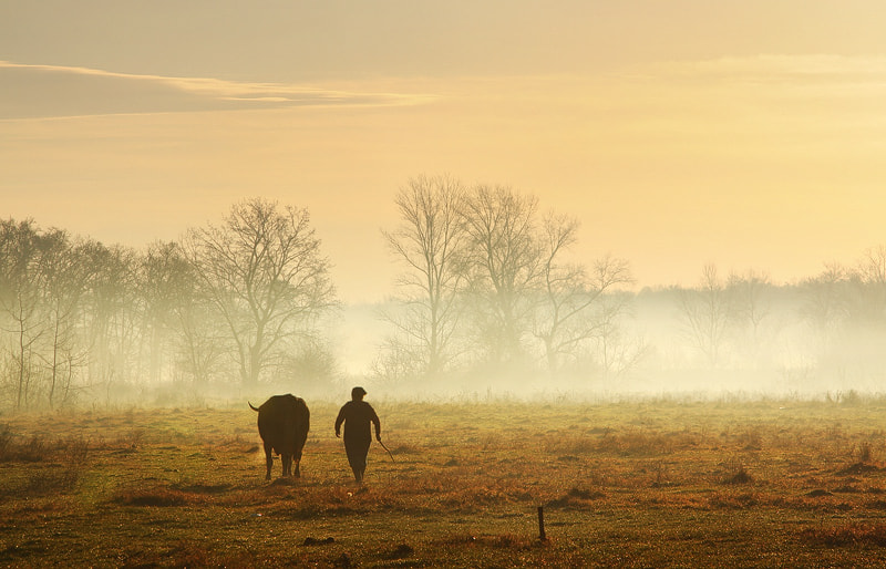 Photograph Pastoral by Andrei  Baciu on 500px