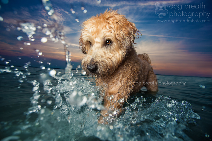 Splash! by Kaylee Greer on 500px.com