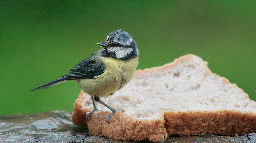 Photograph Bread & Blue by Martin Wait on 500px