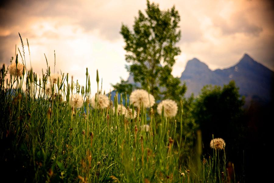 Back path flowers