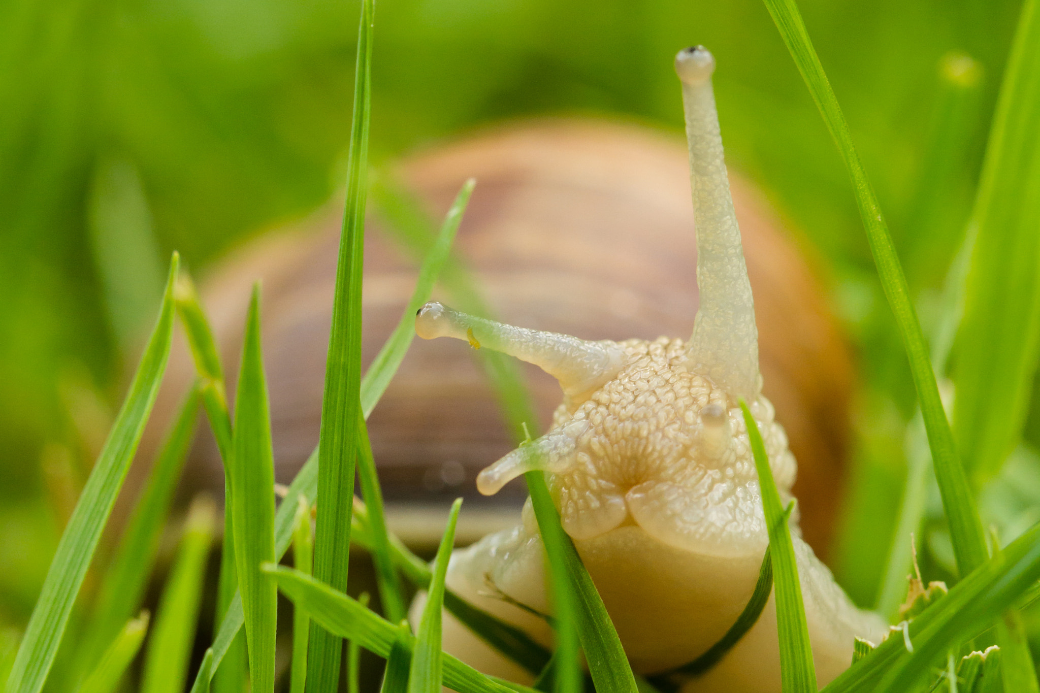 Photograph Snail on the way by Markus _ on 500px