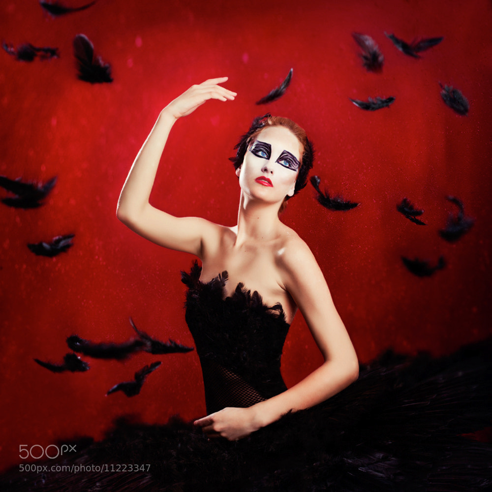 Photograph Black Swan by Vanessa Paxton on 500px