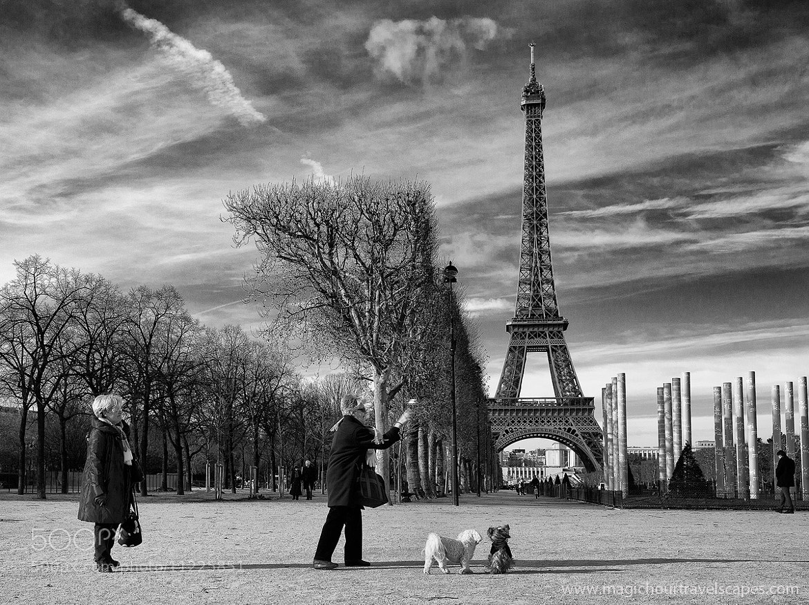 Photograph Fetch by Kah Kit Yoong on 500px