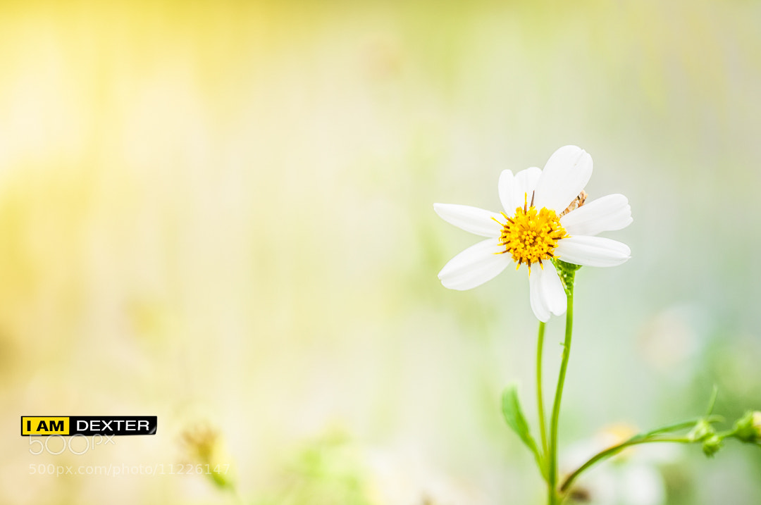 Photograph Flower by Dexter Ae on 500px