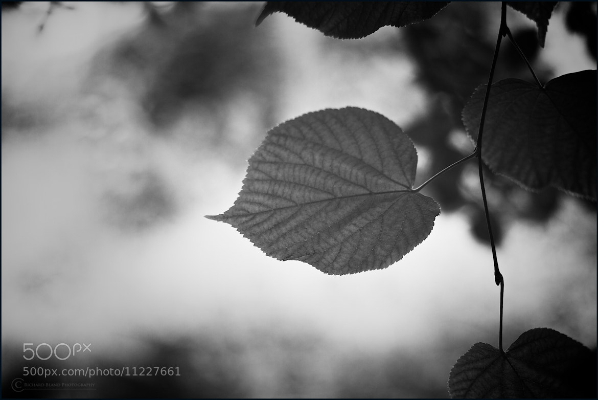 Photograph Simplicity by Richard Bland on 500px