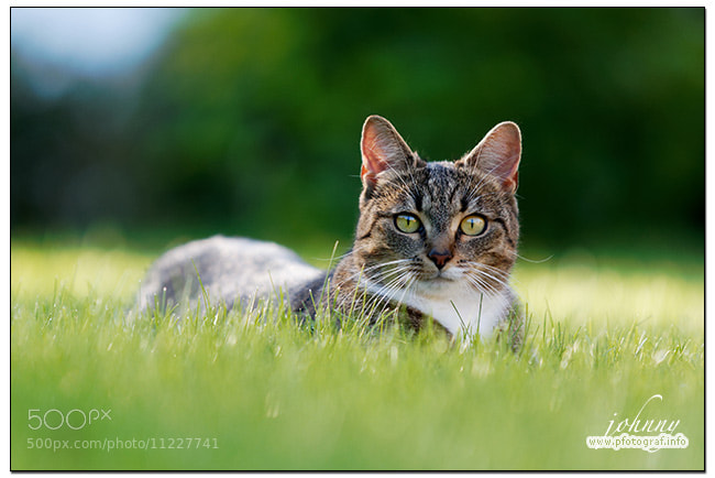 Photograph out in the green by Johnny Krüger on 500px