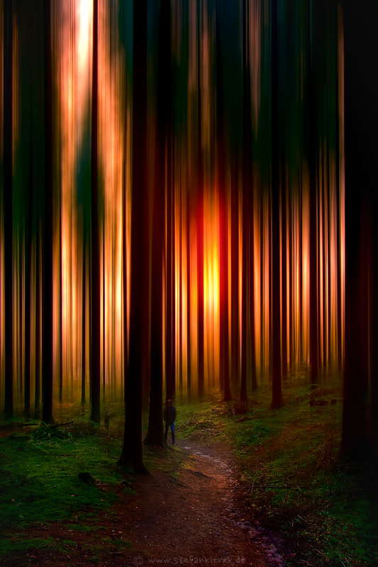 Motion in the forest