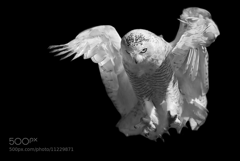 Photograph the fly in B/W by Stefano Ronchi on 500px