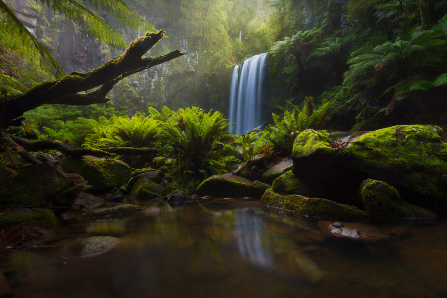 Photograph A Ray of Hope by Dylan Toh  & Marianne Lim on 500px