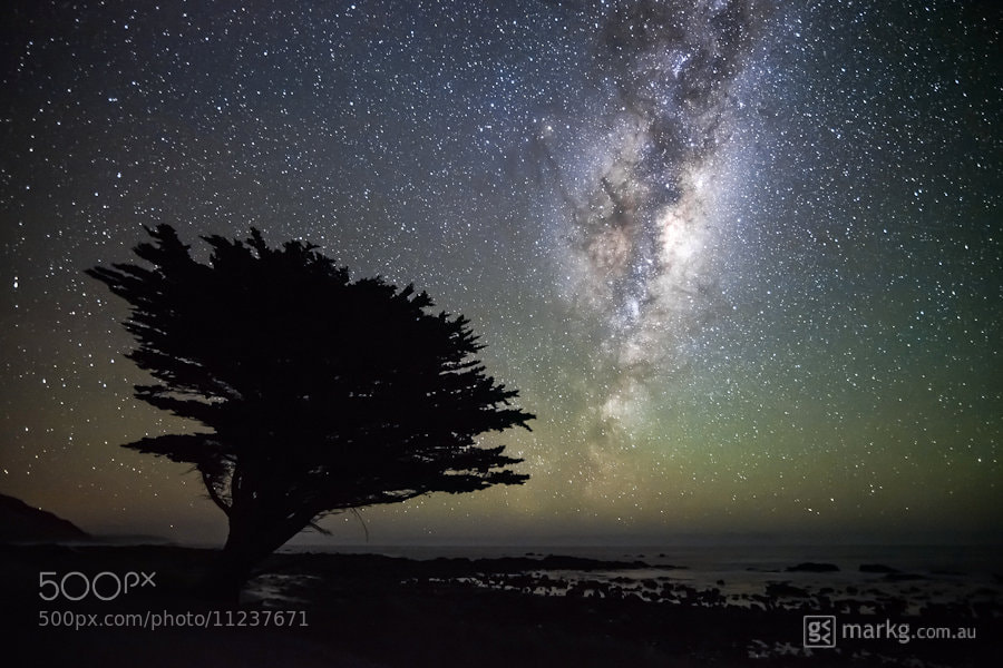 Photograph Tree Under the Stars by Mark Gee on 500px