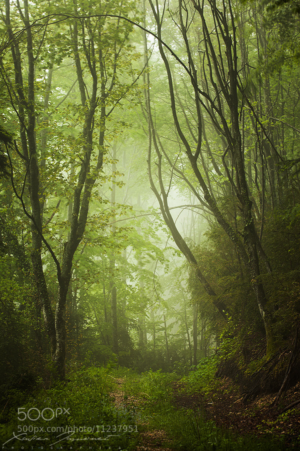 Photograph Elfic world by Xavier Jamonet on 500px