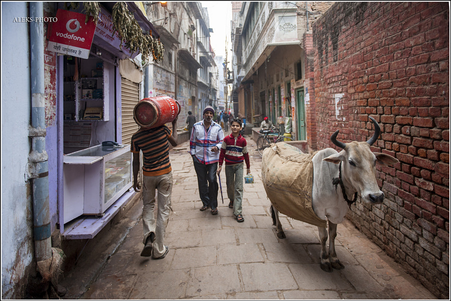 Photograph A street in Varanasi (India) by Alexander TOMILIN on 500px