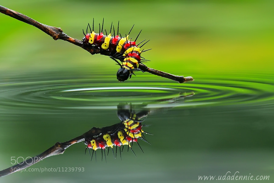 Photograph caterpillar world by Uda Dennie on 500px