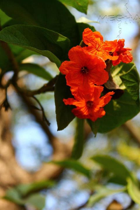 Photograph Orange :-) by Megha Saxena on 500px